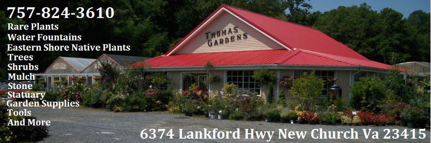 Plants Eastern Shore Delmarva garden centers Eastern Shore
